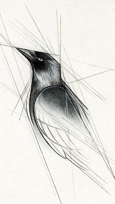 Jackdaw by =Skia on deviantART