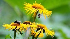 stock-footage-bees-pollinating-yellow-wild-flowers.jpg 400×224 pixels