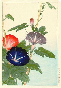 Morning Glory - No date - Hodo Takemura Botanical Drawings, Botanical Prints, Art And Illustration, Watercolor Print, Watercolor Flowers, Motifs Art Nouveau, Japanese Art Styles, Japanese Flowers, Japanese Painting