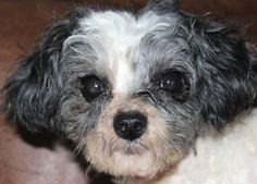 Adopt Meadow, a lovely 3 years 1 month Dog available for adoption at…