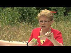 Zatrucia pokarmowe - Drogowskazy zdrowia - porady - Odc 25 - Sezon I - YouTube