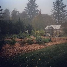 Amanda (@amandarecker) • Foggy fall mornings in the garden. My favorite time to be outside with the ducks and dogs. When they're all SO excited about a new day, how can I not get excited as well (without them and their enthusiasm, I'd likely crawl back into bed with this type of weather) Autumn Morning, Ducks, Mornings, Homesteading, Amanda, The Outsiders, Weather, Canning, Type
