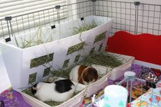 Another cool Guinea Pig set-up.