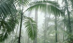 A report says there is public confusion over the offsetting of carbon emissions by carbon sinks such as forests