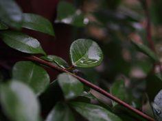 platform leaf