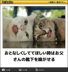 猫bokete(ボケて)秀逸ボケ - NAVER まとめ Cat Lovers, Dog Cat, Cute Animals, Geek Stuff, Kawaii, Humor, Cats, Funny, Iphone