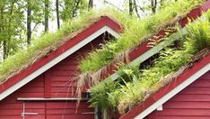 f you think a roof garden is right for you, Natural Home and Garden offers detailed instructions on the building and maintenance of these beautiful home additions Off Grid, Residential Roofing, Residential Architecture, Contemporary Architecture, Sustainable Architecture, Natural Landscaping, Living Roofs, Living Walls, Cool Roof