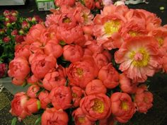 Coral Peonies--this is the color I would like to see with my flowers.