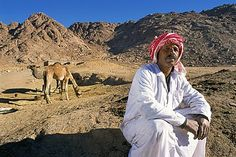 Bedu nomad with camels, near Mount Sinai, Sinai, Egypt, North Africa, Africa