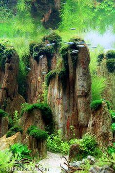 Kivettyneillä puilla saisi samaa fiilistä