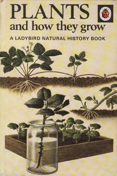 Vintage Ladybird Book on Plants and How They Grow