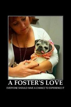 Volunteers Cast a Beautiful Shadow Pug Rescue, Animal Rescue, Funny Dogs, Cute Dogs, Black Pug, Dog Items, Pug Love, Best Dogs, The Fosters