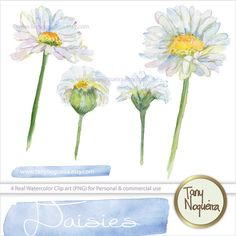 Hey, I found this really awesome Etsy listing at https://www.etsy.com/listing/195684702/daisies-daysies-clip-art-images