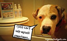 My Dog's Bad Habit Is Drinking From the Toilet - Self-Cleen Toilet Ring Repellent Giveaway http://www.mypawsitivelypets.com/2015/11/my-dogs-bad-habit-is-drinking-from.html
