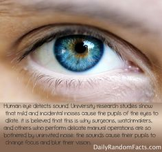 Random Fact: The Human eye detects sound. University research studies show that mild and incidental noises cause the pupils of the eyes to dilate. It is believed that this why surgeons, watchmakers and others who perform delicate manual operations are so bothered by uninvited noise: the sounds cause their pupils to change focus and blur their vision.