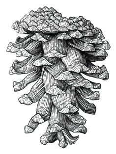 Ponderosa Pinecone Print by Kirsten Wahlquist.  All prints are professionally printed, packaged, and shipped within 3 - 4 business days. Choose from multiple sizes and hundreds of frame and mat options.