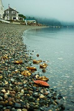 Maine shoreline - beautiful