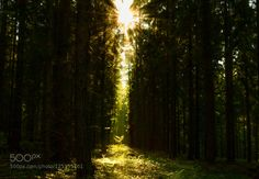 Sunny forest by UliCremerius. Please Like http://fb.me/go4photos and Follow @go4fotos Thank You. :-)