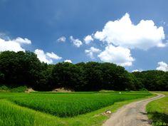 メインブログ ⇒ 夏空の里山田んぼ - 農村写真家 田舎人 ・・・埼玉県比企郡鳩山町の里山風景・・・