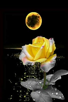 Amazing beauty amazingly beautiful moon(images and gifs) лун Beautiful Moon Images, Beautiful Dark Art, Beautiful Flowers Wallpapers, Good Morning Beautiful Flowers, Beautiful Rose Flowers, Flower Phone Wallpaper, Flower Wallpaper, Rosa Rose, Moon Pictures