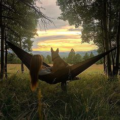 Isn't it amazing that a view like this is only a 15 minute drive from the store? Hammock life for sure is the best life. If you don't have one we have a huge selection at Peace Surplus to choose from! #hammocklife #grandtrunk #hammock #Flagstaff #AZ #PeaceSurplus #mountaingirls #lifeisgood #best #chillen  //model @madssmith7 & dog Tahoe. Photo by @joyfuljessss // #campingwithdogs