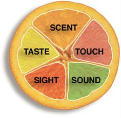 A range of structured,whole class multi-sensory experiences linked to a central theme.