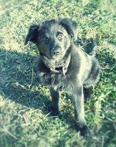 Schäferhund Mischling Jessi Mein Vorsatz für´s neue Jahr: Mehr Kuscheln! ♥ Hundename: Jessi / Rasse: Schäferhund Mischling      Mehr Fotos: https://magazin.dogs-2-love.com/foto/schaeferhund-mischling-jessi/ 2014, Foto, Hund, Jahr