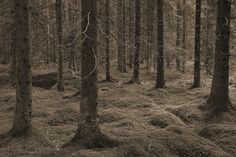 Troll Forest - Sepia