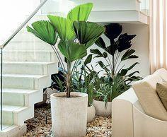 O que fazer com o espaço debaixo da escada? Um jardim, é claro! O paisagista Gil Fialho preencheu o recorte de apenas 4 m² com licualas, pacovás e íris. Ótima ideia!