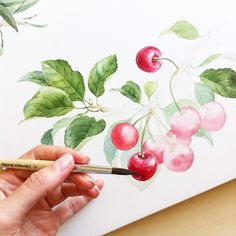 watercolor illustrations for Protek