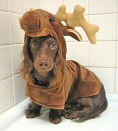 And this is exactly why we love dogs in fancy dress!