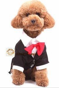 Pets Cosplay - Gentleman Suit