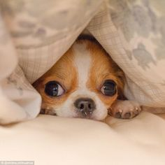 In another image the pup is seen hiding under a duvet cover as she goes for a snooze ...