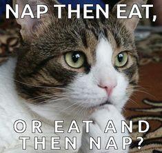 such a cat dilema