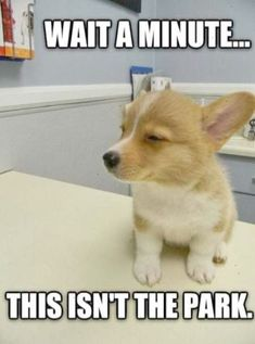 34 Super Funny And Cute Animal Pictures