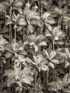Fashion Gone rouge: Photo Textures Patterns, Print Patterns, Images Instagram, Fashion Gone Rouge, Wild Photography, Art Corner, Tumblr, Nature Photos, Black And White Photography