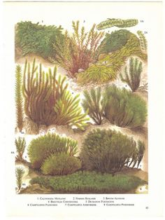 Vintage Moss Print, Rustic Green Nature Print, Mosses and Liverworts Book Plate 83