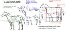 Horse_Tutorial_Proportions_by_vixentheangryfox, How to Draw a horse, drawing horse Anatomy tut, How to draw Animals, tutorials for drawing animals, animal anatomy, animal sketches, cute, kawaii, realistic, animals , equestrian, horse, art teacher , art lesson
