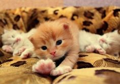 15 Cutest Meow Newcomers