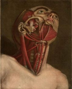 Coloured plates from Essai d'Anatomie (1745) | The Public Domain Review