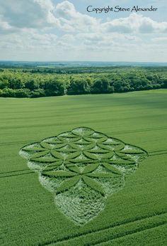 Aparece Crop Circle en Blackwood, Popham, Hampshire, Reino Unido, el crop circle fue reportado el 27 de junio de 2016.  Este Crop Circle tiene una forma de diamante formado a partir de círculos en una relación de seis veces el uno al otro. La formación parece una joya una esmeralda en el paisaje!