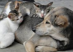 Dogs and cats by Minimum01, via Flickr