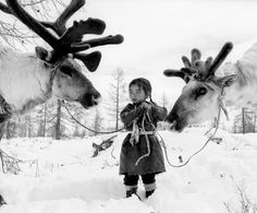 Nomad girl in Mongolia with her reindeers