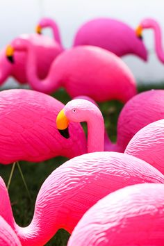 Happy Flocking Birth