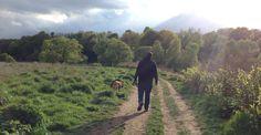 #newtonthefrenchmastiff // Spaziergang mit Newton, der Bordeaux Dogge
