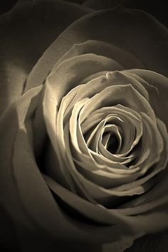Other than being altered with a sepia filter this rose macro is straight out of the camera.