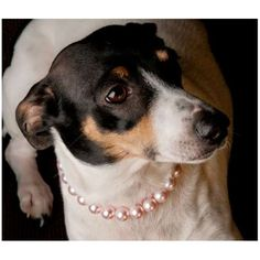 Pet Collars #pets #jewelry