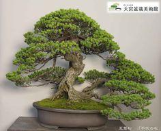 盆栽美術館写真2-1024x831.jpg (1024×831)