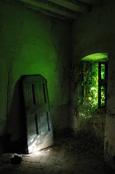 I love this old overtaken room. This would be a fantastic garden house room or even cellar. I want a house that is this enclosed with plants.
