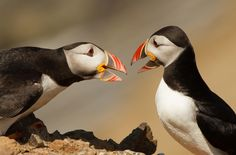 Photograph Debate by Tim Wright on 500px